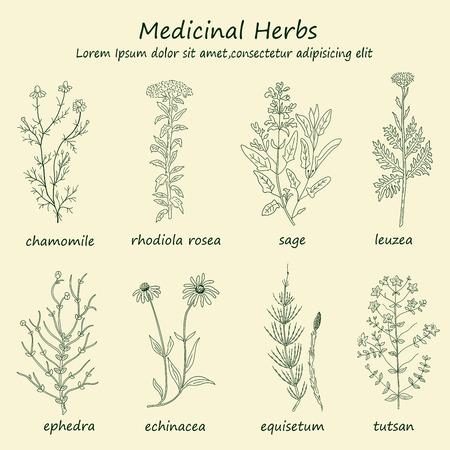 Disegnata a mano erbe curative serie di disegni vettoriali. Disegno dell'annata con erbe officinali e fiori illustrazione.