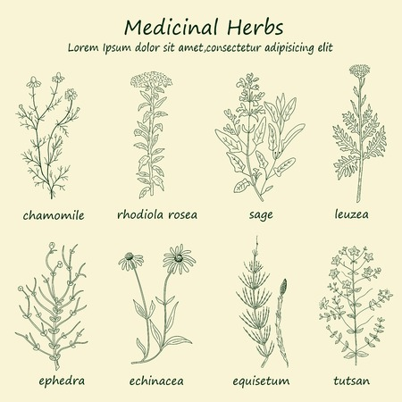 aromatic: Hand drawn healing herbs set of vector sketches. Vintage design with medicinal herbs and flowers illustration.