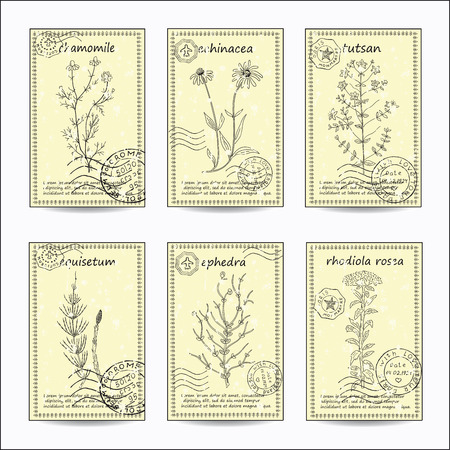 herbal: Hand drawn healing herbs postcards. Vintage design with medicinal herbs and flowers illustration. Set of vector sketches. Illustration