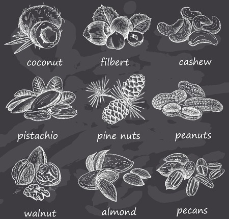 walnut: Hand drawn nuts on chalkboard. Vintage design with coconut, pine nuts, almond, pistachio, walnut, filbert illustration. Set of vector sketches.