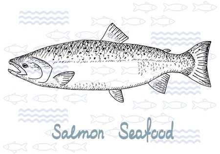 salmons: Fish hand drawn sketches. Vintage design with salmon illustration. Fishing and seafood background.