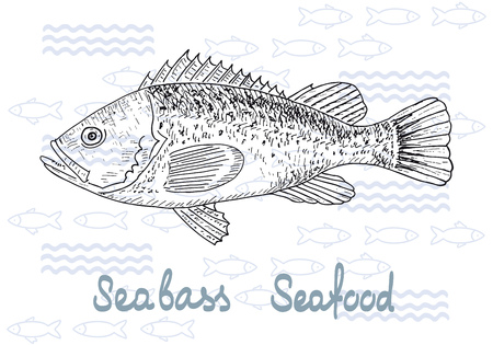 sea bass: Fish hand drawn sketches. Vintage design with sea bass illustration. Fishing and seafood background. Illustration