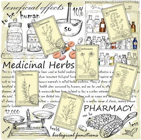 手は癒しのハーブのポストカードを描かれました。薬効があるハーブと薬局イラストでビンテージ デザイン。  イラスト・ベクター素材
