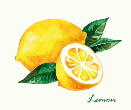 Watercolor lemon. Hand painted realistic illustration. Vintage design eco natural food fruit on white background. Vectores