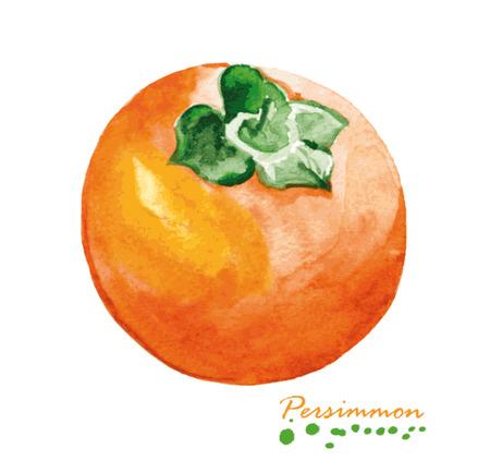 水彩の柿。手描きのリアルなイラスト。ビンテージ デザイン エコ自然食品フルーツ白い背景の上。  イラスト・ベクター素材
