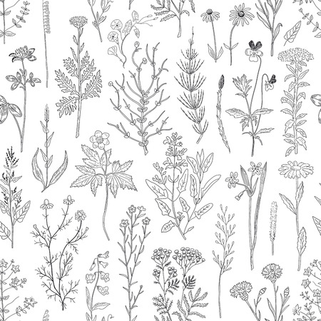 Hand drawn sketch herbs and flowers vintage seamless pattern. Vector illustration background.