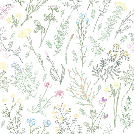 variegated: Hand drawn sketch variegated herbs and flowers vintage seamless pattern. Vector illustration background. Illustration