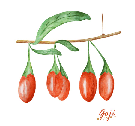 Watercolor Goji berries