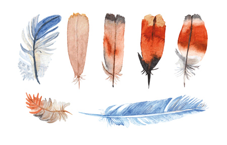Watercolor feathers hand painted