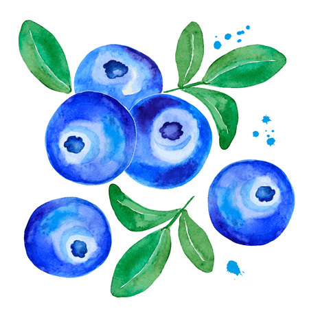Postcard of a watercolor blueberry. Imagens - 78352784