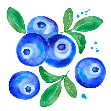 Postcard of a watercolor blueberry. Banco de Imagens - 78352784