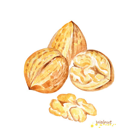 Watercolor Walnut. Hand painted