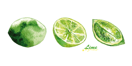 Watercolor lime and lime slices. Vector illustration.