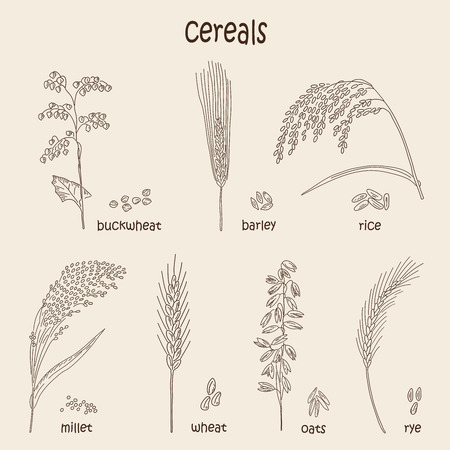 Sketched hand drawn cereals. Vector illustration.