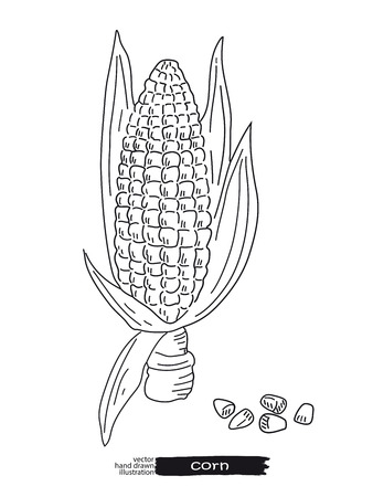 Sketched hand drawn corn