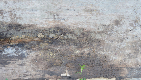 background wood plank and cement Banco de Imagens