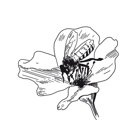Bee collects honey on flowers. Vector sketches hand drawn illustration background. Flyer, booklet advertising and design. Banco de Imagens - 127711431