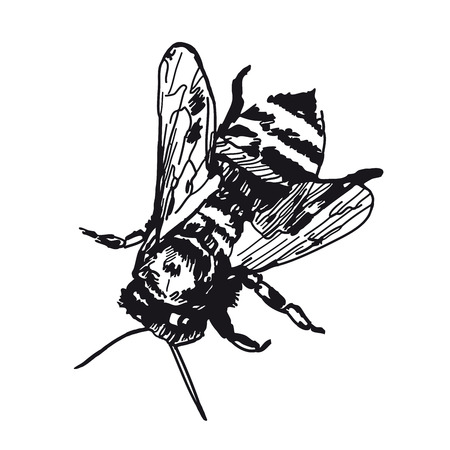 Honey bee. Vector sketches hand drawn illustration background. Flyer, booklet advertising and design.