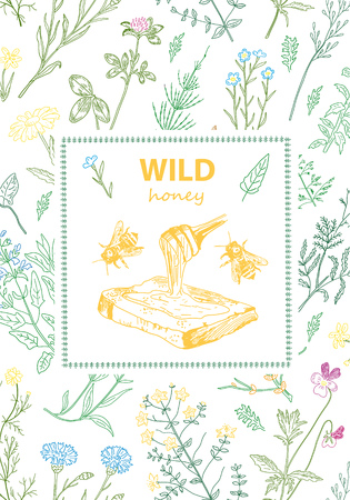 Frames with honey bee, hive, herbs and wild flowers. Hand drawn vintage vector illustration. Line art style. Rustic template, greenery color. Illustration