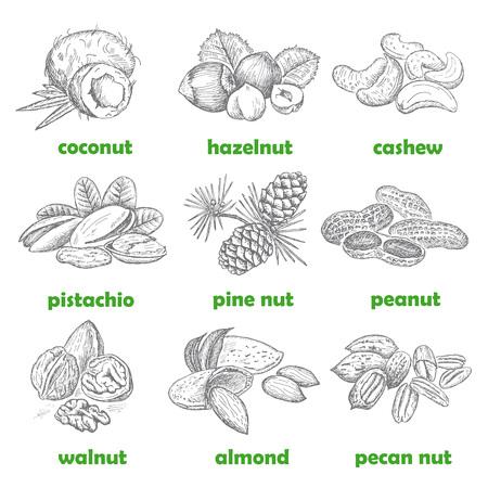 Nuts set. Hand drawn vintage illustration. Natural and healthful nuts background. Line art style. Иллюстрация