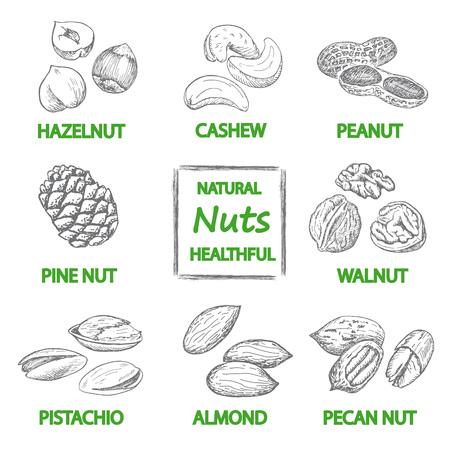 Nuts set. Hand drawn vintage illustration. Natural and healthful nuts background. Line art style. Ilustração