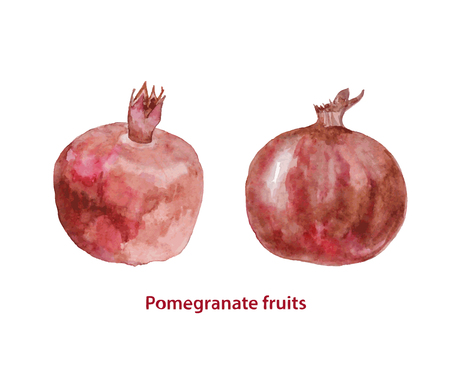 Watercolor two pomegranates fruits. Hand painted realistic illustration on paper. Vintage design food and drink isolated on white background.