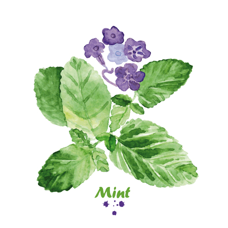 Watercolor mint with flowers. Hand painted realistic illustration on paper. Vintage design herbs and spices isolated on white background. Ilustração
