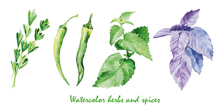 Watercolor herbs and spices. Hand painted realistic illustration on paper. Vintage design food isolated on white background. Ilustração