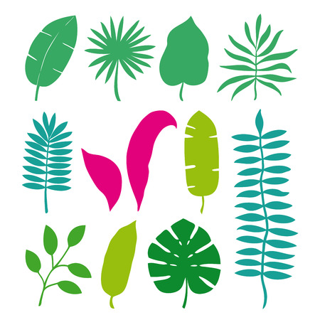 Set of tropical leaves palms, trees. Vector illustration isolated on white background.