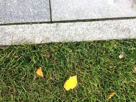Yellow leaves on green lawn near concrete path. Фото со стока