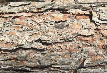 Texture of old wood tree bark for background. Reklamní fotografie
