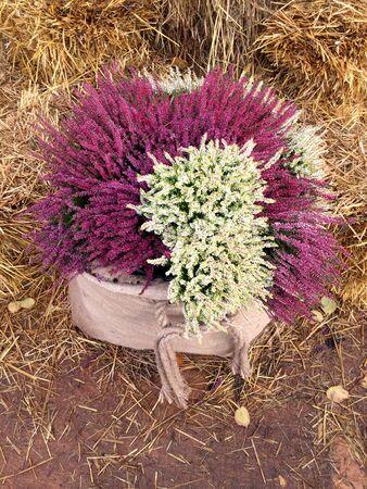 Decor met herfstheidebloemen in linnen zakjes. Stockfoto