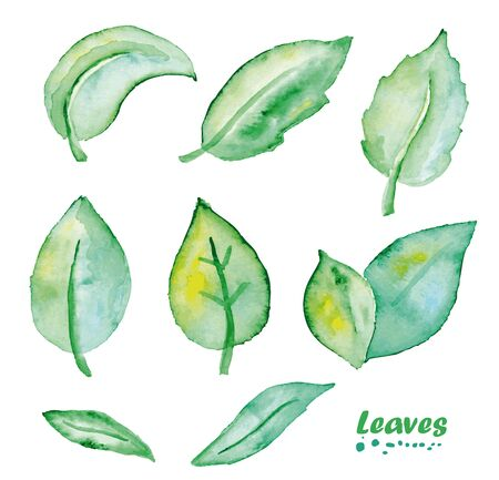 Watercolor Leaves set. Hand painted realistic illustration on paper. Vintage design natural leaves isolated on white background.