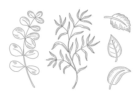 Designer elements set. Collection natural leaves herbs. Vettoriali
