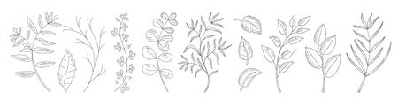 Collection natural leaves, herbs, grass and branch.