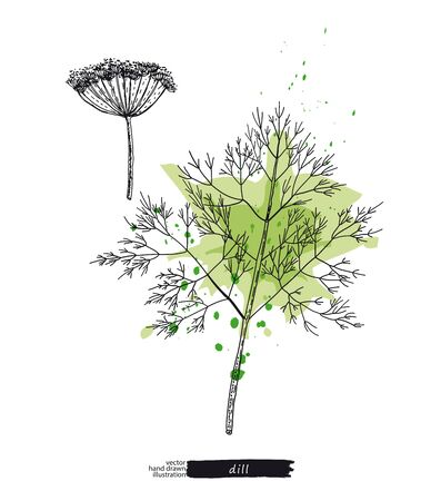 Dill with watercolor stains. Vector sketches hand drawn