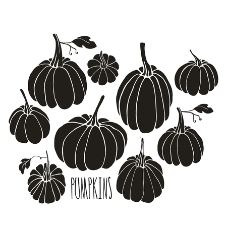 cooking book: Hand drawn pumpkins on white background. Halloween symbol. Design element for poster, t-shirt, cooking book.