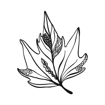 Hand drawn maple leaf on white with decoration.