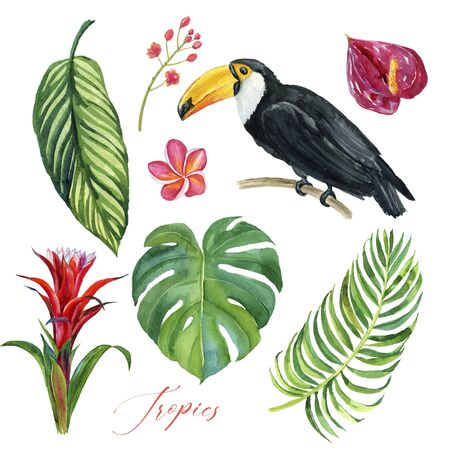 Exotic birds and tropical flowers and leaves, watercolor illustration. Tropical set
