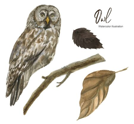 Isolated Watercolor illustration with an owl and a branch. A set of elements. Suitable for creating cards, invitations, holidays, etc.