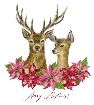 Hand painted couple deers and poinsettia wreath isolated on white background. Watercolor illustrations. Perfect for design, nursery posters, postcards