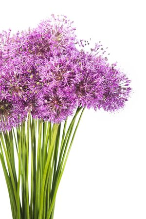 Close-up photo of onion flowers bouquet isolated on white background