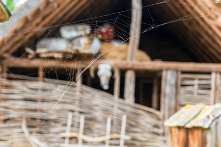 cobweb or spider web on wooden texture background wall in ancient slavic house