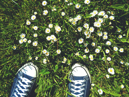 chamomile flower: Sneakers and the blossoming field of chamomile