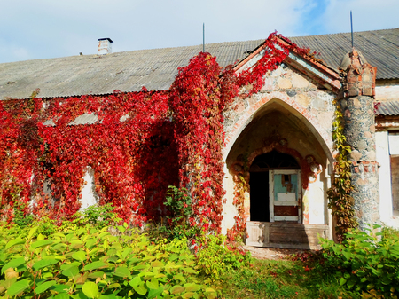 The old abandoned building with red ivy in Belarus Editorial