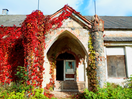 damaged roof: The old abandoned building with red ivy in Belarus Editorial