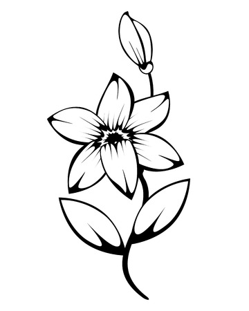outlines: lily monochrome silhouette for design