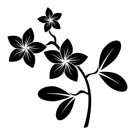 frangipani branch silhouette vector for design