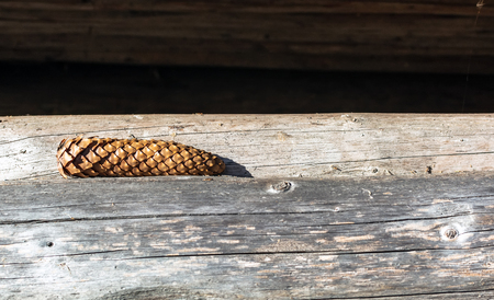 Natural brown fir-cone lying on the wooden logs lit by autumn bright sun.