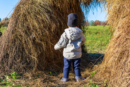 Little kid dressed in grey jacket, blue jeans and black hat standing with his back to the camera in huge haystack in wheat field on sunny autumn day. Children environment concept.